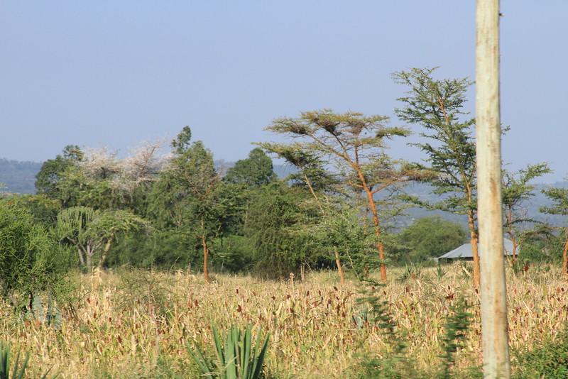 Kenya Part1 '15 2537.JPG