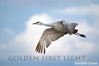 Sandhill Crane, Bosque del Apache NM, USA