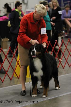 BMD- Winners Dog