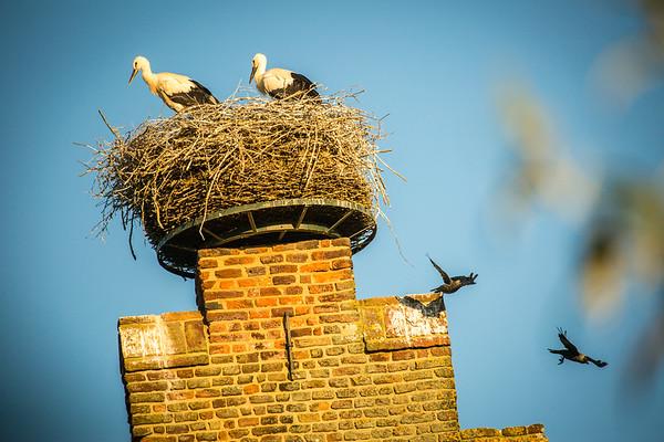 Birds: Stork🐣