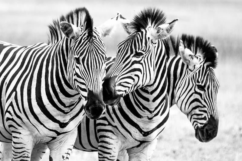 Africa Botswana-1-2.jpg