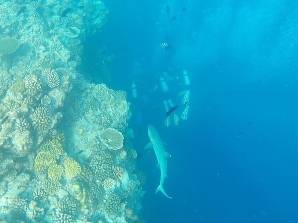 Underwater (I)