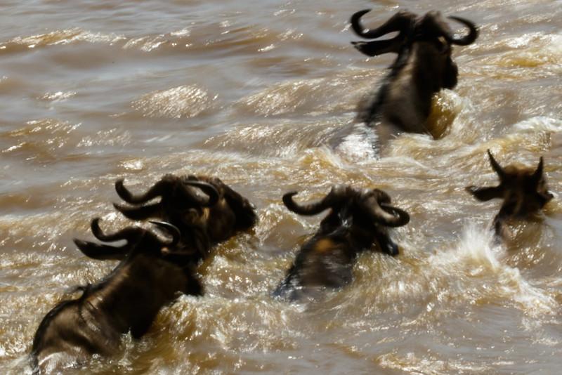 Kenya 2015-06700.jpg