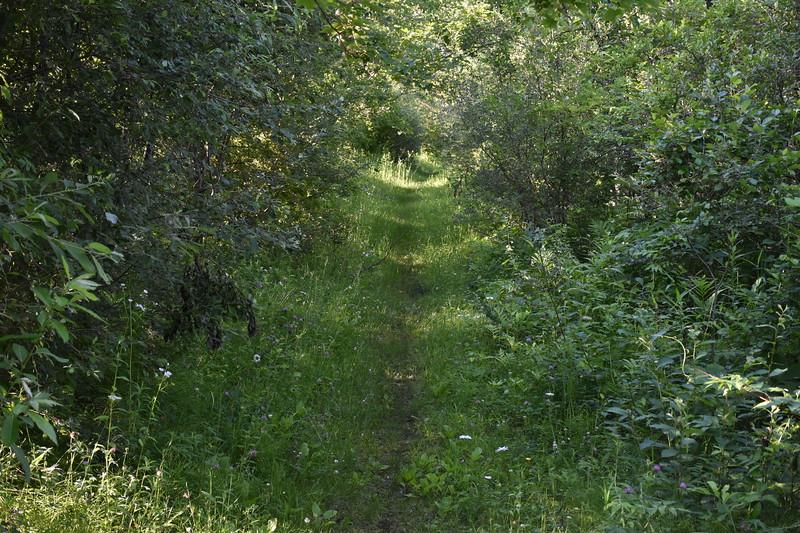 2019_06_26 CS Trail (69).JPG