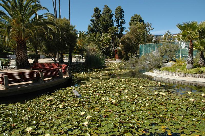 Koi Pond and water lilies...blue heron...
