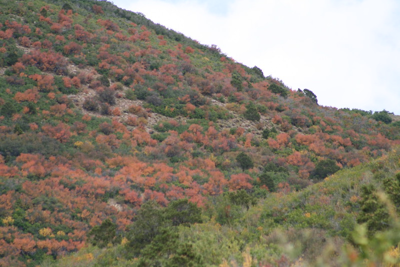 20080909-137 - LaSal Mountain Loop - 04 Fall Foilage.JPG