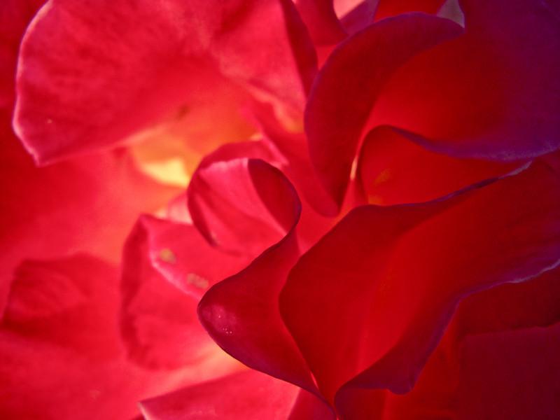 apr6_petal.jpg