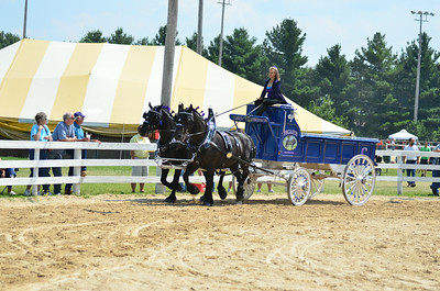 ladies team percherons