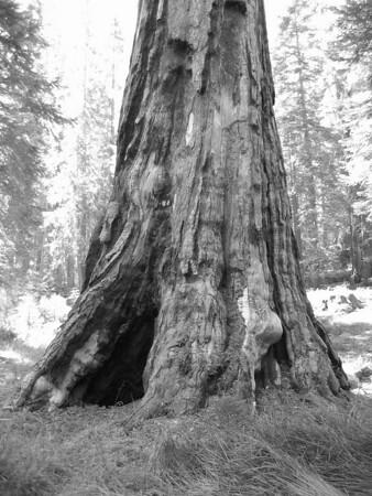2005_08_28-09_02_Yosemite