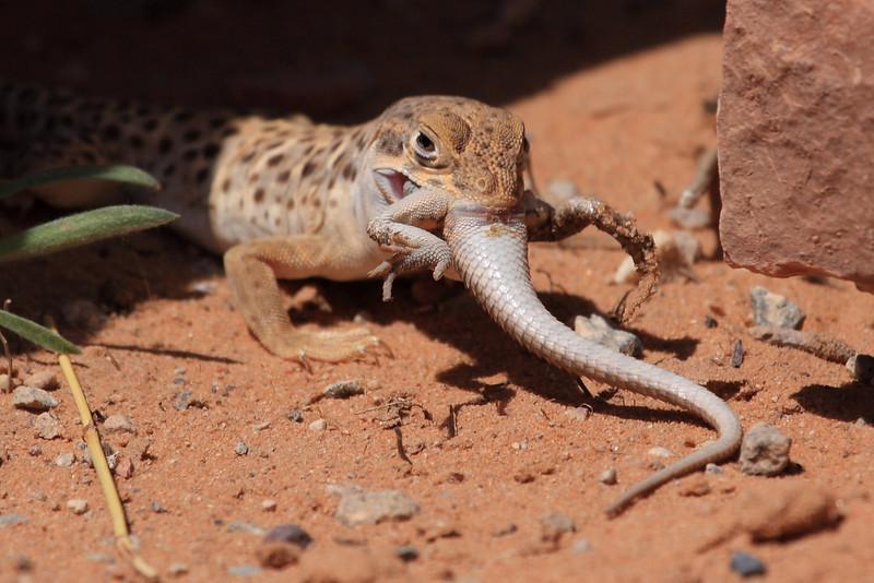 Lizard0004.JPG