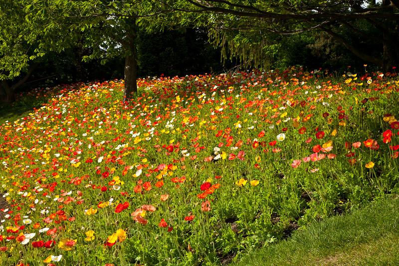 Botanic_Garden13-0623.jpg