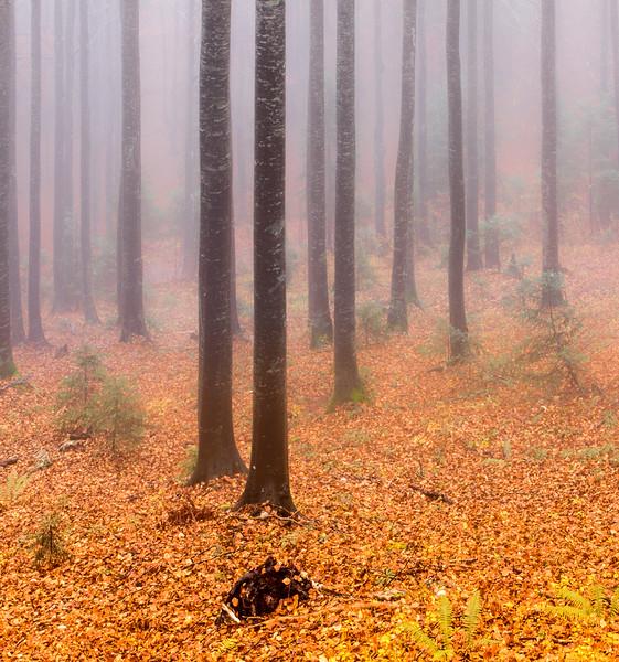 Misty forest Slovenia.jpg