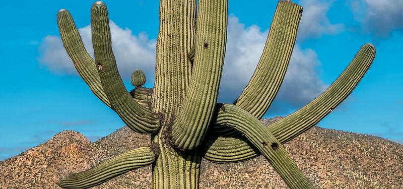 I-11 - Unusual Sonora North of Tortoise Trail #4