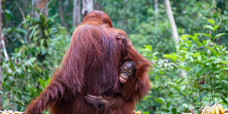 2012.10.07_Borneo_DSC_7504-Edit-Juno Kim.jpg