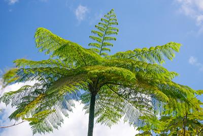 El Yunque Rain Forest/Isolatek Ladies/Puerto Rico - Feb., 2012