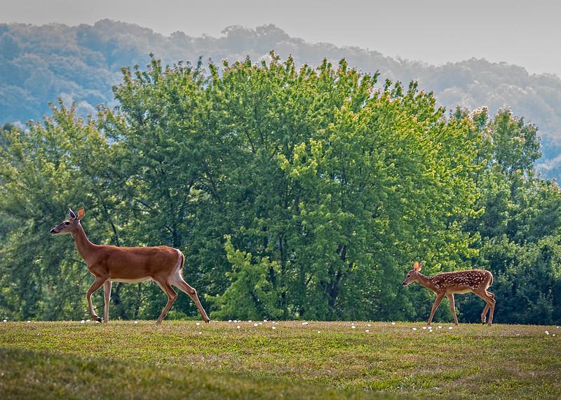 DeerFamily03.jpg