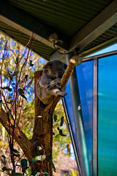 2010-08-24 Dernière ballade à Sydney-0105.jpg