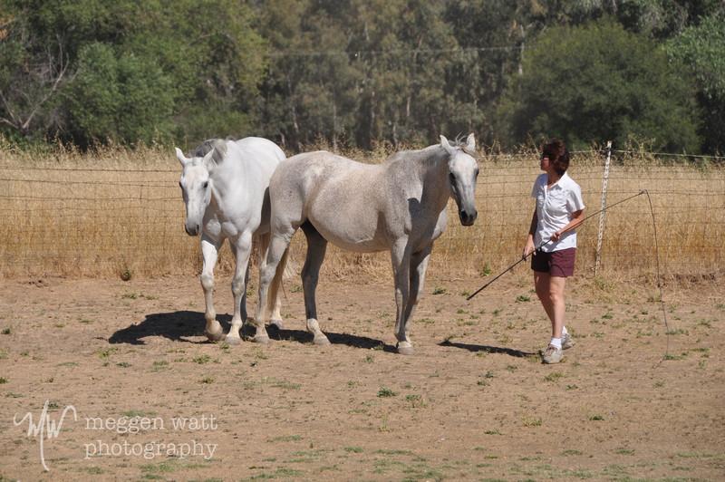 EB&Horses-106.jpg