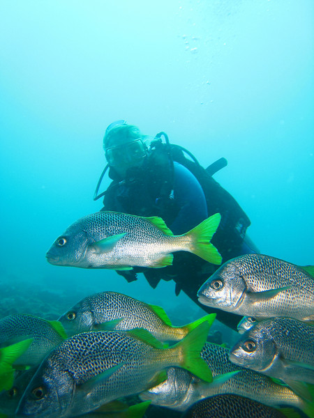 Diving in the Galapagos (72 of 392)
