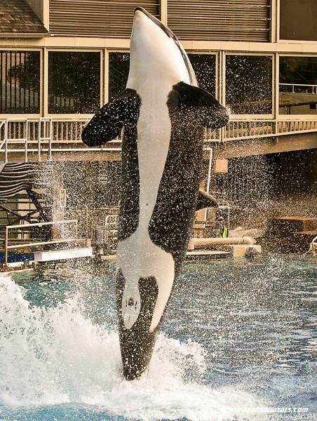 Seaworld-Zoo-15.jpg