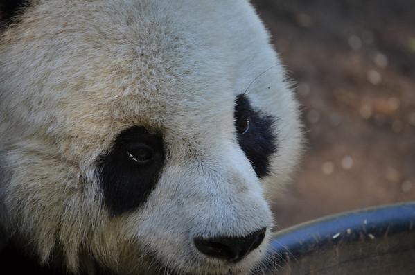 2012-03-04 San Diego Zoo