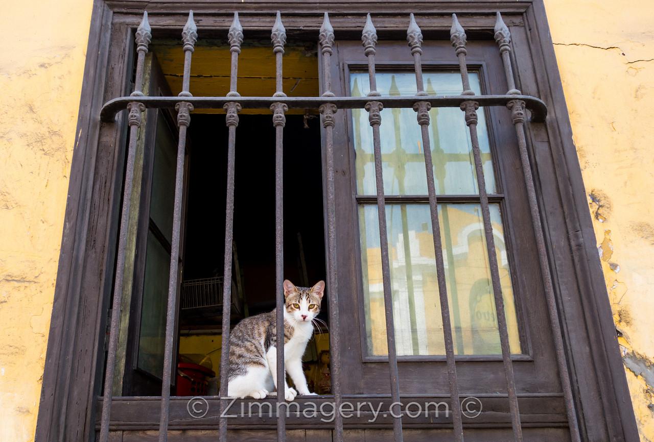 Cat in Window, Barranco District, Lima, Peru