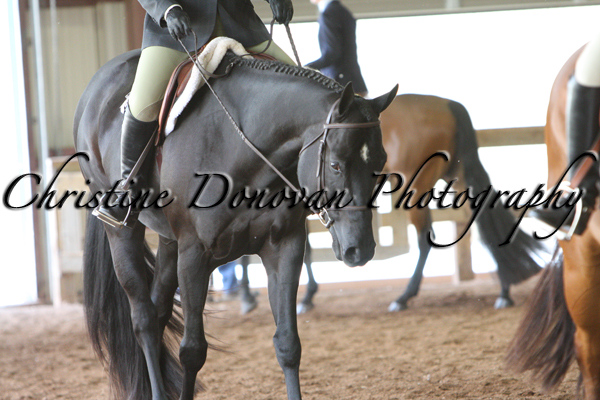 Senior Hunter Under Saddle