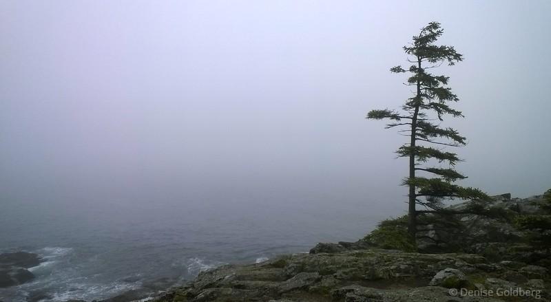 on Schooner Head, Acadia National Park