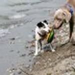 farley pups 062-2.jpg