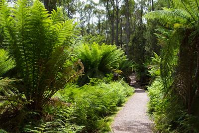 Landskabsbilleder fra Tasmanien