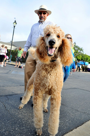 Poodle day 2012-Before the Parade
