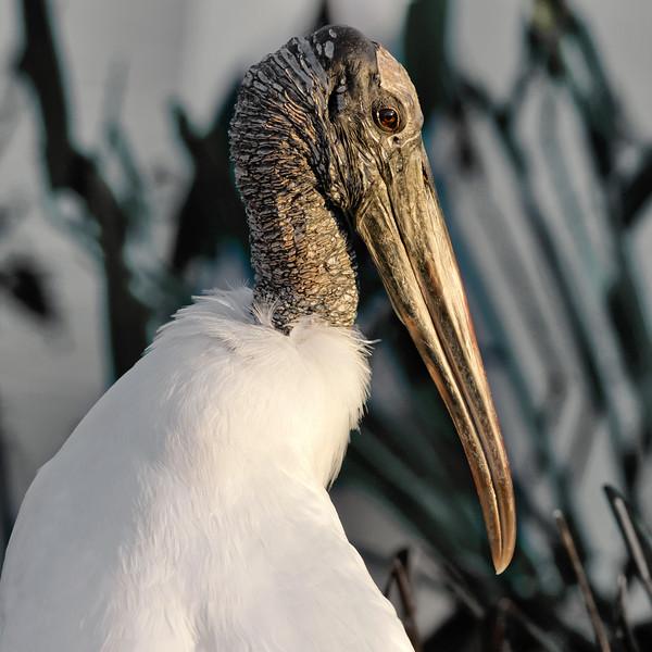 storkd.jpg
