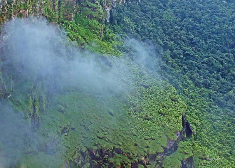 Kaieteur National Park - rainforest (2).JPG