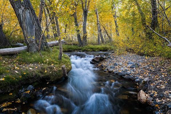 Eastern Sierra Fall Colors 2018