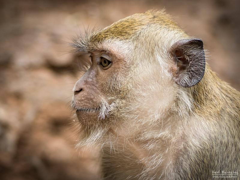2017-12-22 Monkeys-2.jpg