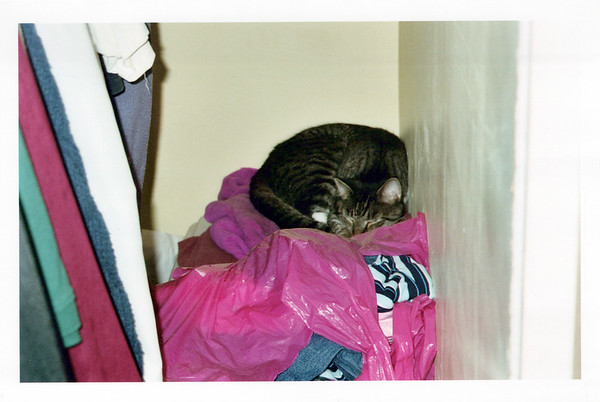 2005_Cats