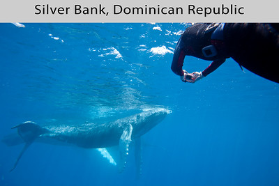 Silver Bank, Dominican Republic