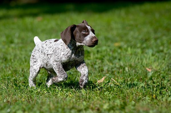 Pups 9-7-15