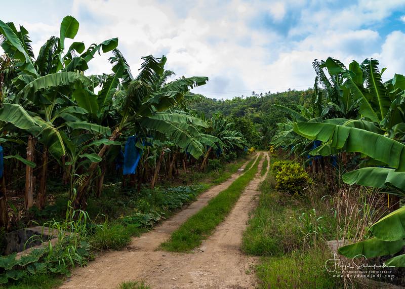 Roseau Valley Banana Plantation