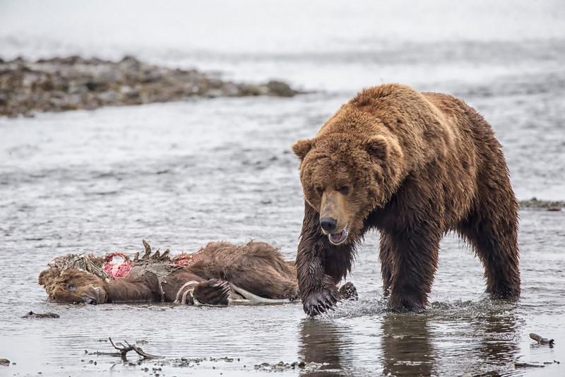 Alaska_2013_FH0T4079.jpg