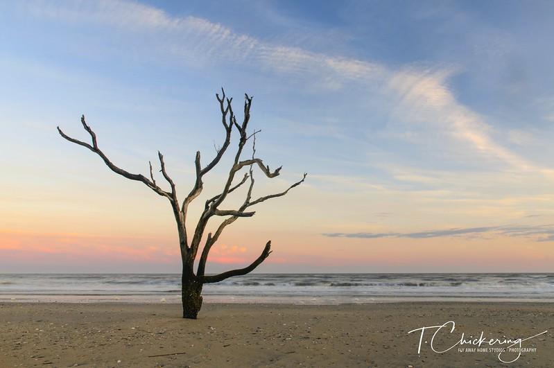 Edisto Tree 5-1505676783659.jpg