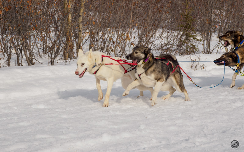 20190325_Blaire_and_Liz_Mushing_27.jpg