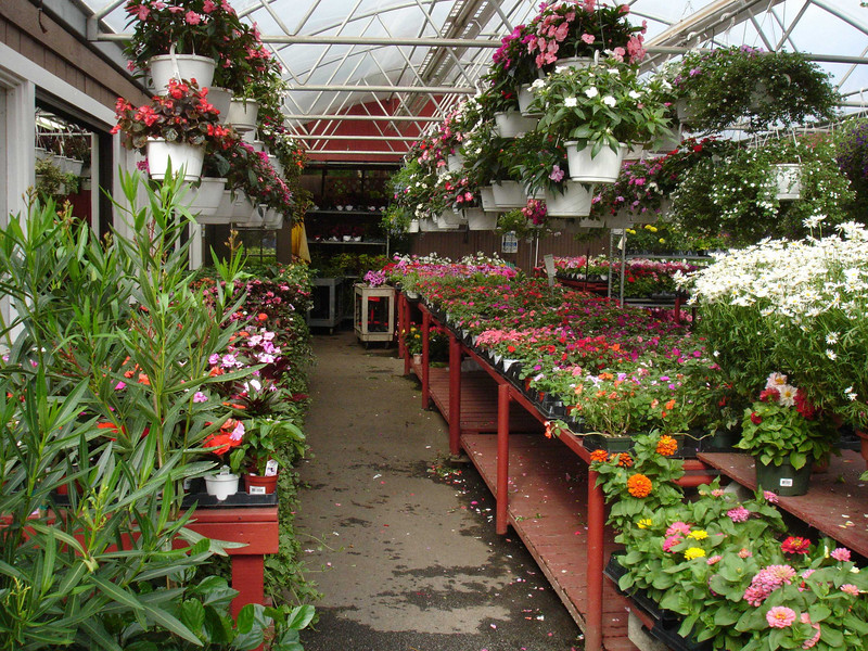 Mainly annuals here.