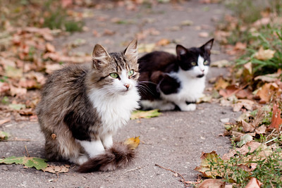 street kittens