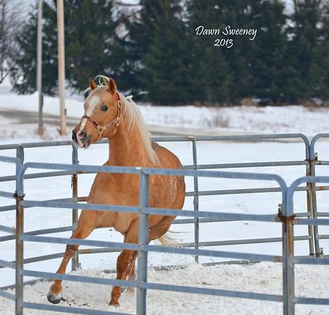 jan horses