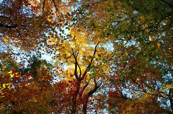 Rock Creek Canopy (11/2011)