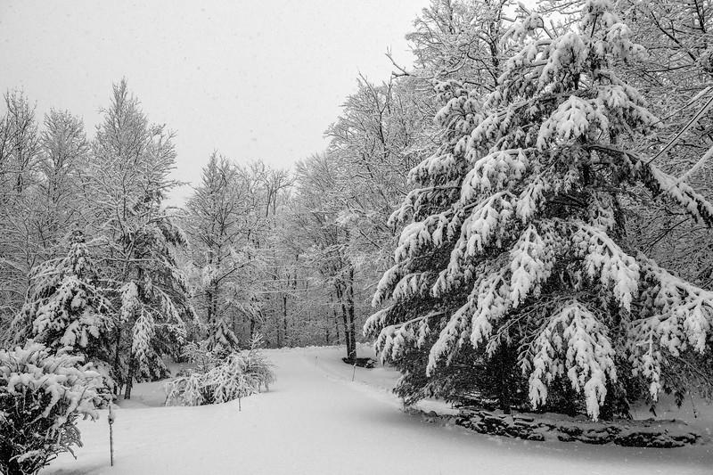 Winter Snow  #1902