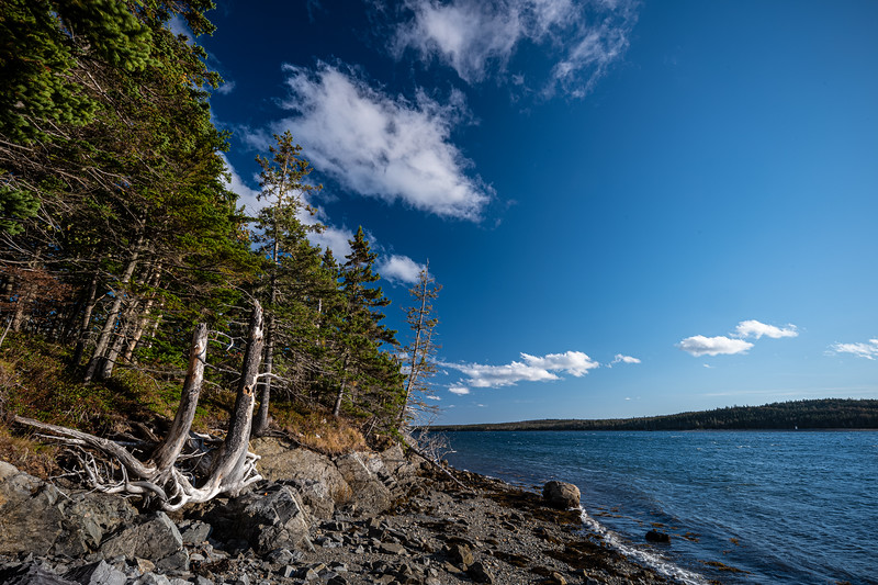 trees & rocky inlet Country Harbour NS.jpg