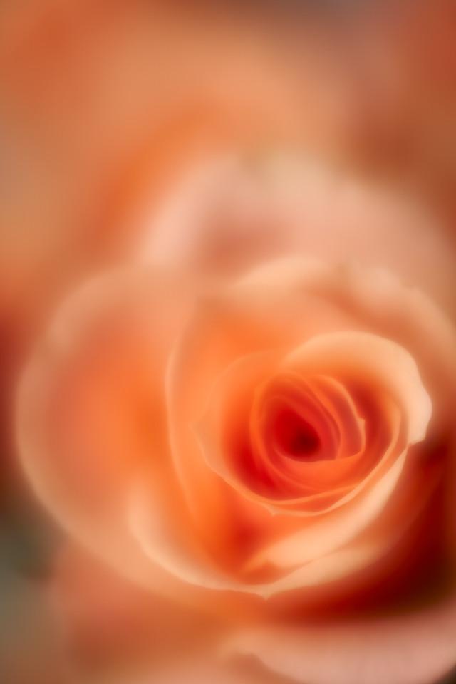 IMAGE: https://photos.smugmug.com/photos/i-fg8kvZb/0/a01c0c5c/X2/i-fg8kvZb-X2.jpg