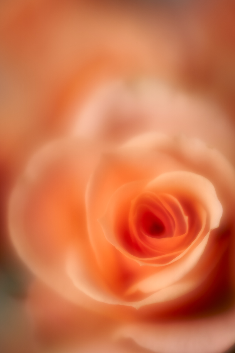 IMAGE: https://photos.smugmug.com/photos/i-fg8kvZb/0/a01c0c5c/X3/i-fg8kvZb-X3.jpg